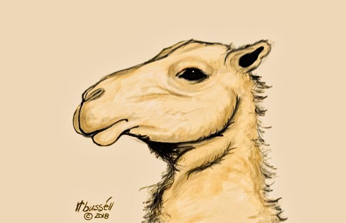 camel © rl busséll 2018