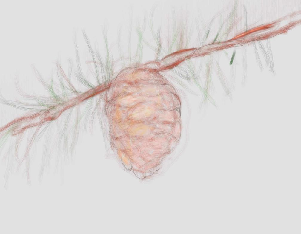 pine and needle