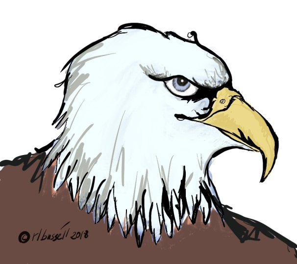 a colored sketch of an eagle